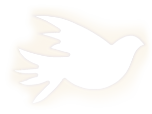 image of a peace dove